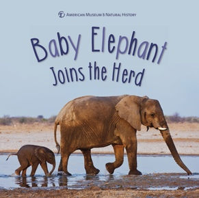 Baby Elephant Joins the Herd